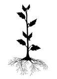 Growth. The plant silhouette created by Digital Illustration, roots and growth Stock Photos