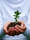 Growth. Seedling in young woman hands Royalty Free Stock Photography