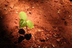 Growth. Aerial view of a small plant growing Stock Image