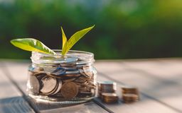 Growth of business and coins. Business Development Concept. Glass jar with coins and a fresh green sprout. Growth in revenue and business development Stock Image
