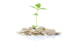 Growth in coins. Concept of new money growth a budding plant growing in coins  on white background Royalty Free Stock Photos