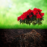 Growth concept background Stock Photography