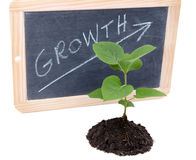 Growth concept with a green small plant Royalty Free Stock Images