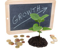 Growth concept with a green small plant Stock Photography
