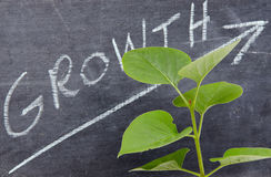 Growth concept with a green small plant Stock Photo