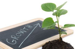 Growth concept with a green small plant Royalty Free Stock Image