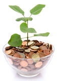 Growth concept with a green small plant planted in coins Stock Images