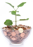 Growth concept with a green small plant planted in coins Royalty Free Stock Photos