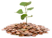 Growth concept with a green small plant planted in coins Stock Photo