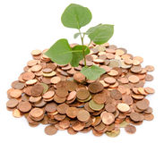 Growth concept with a green small plant planted in coins Stock Photography