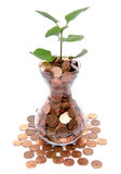 Growth concept with a green small plant planted in coins Stock Photos