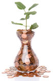 Growth concept with a green small plant planted in coins Royalty Free Stock Images