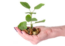 Growth concept with human hand holding a green small plant plant Royalty Free Stock Image