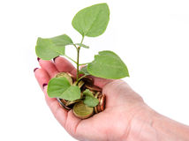 Growth concept with human hand holding a green small plant plant Royalty Free Stock Photography
