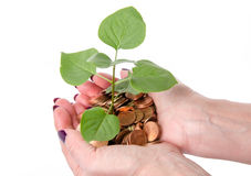 Growth concept with human hands holding a green small plant plan Stock Photography