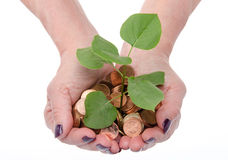 Growth concept with human hands holding a green small plant plan Royalty Free Stock Image