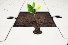 Growth and development through teamwork. Plant grows from a puzzle. Growth and development through teamwork concept Stock Images