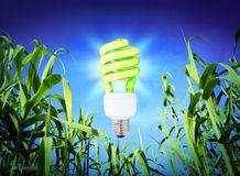Growth ecology - compact  fluorescent lamp - green lighting Royalty Free Stock Photos