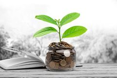 Growth. Finance banking account business tree accounting Royalty Free Stock Photos