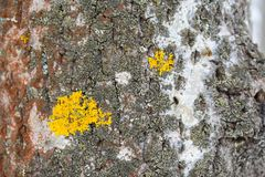 These growth form groups are not precisely defined. There are variations in growth types in a single lichen species, grey areas between the growth type Stock Images