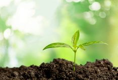 Growth. Gardening Seedling Plant Beginnings Cultivated Dirt Stock Photos