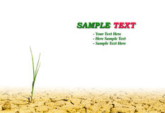 Growth grass on dry soil. Growth green grass on dry soil vector illustration