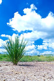 Growth grass on dry soil. And blue sky stock illustration