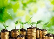 Growth. Green business money investment prosperity concept Royalty Free Stock Photography