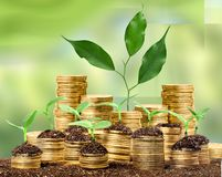Growth. Green business money investment prosperity concept royalty free stock images