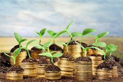 Growth. Green business money investment prosperity concept Stock Photos