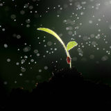 The growth of green plants. Royalty Free Stock Photography