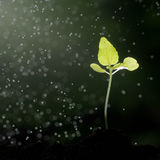 The growth of green plants. Royalty Free Stock Image
