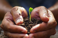 Growth of green plants. Royalty Free Stock Images