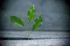 Growth. Grow idea beginning restart sprout symbol Royalty Free Stock Photography