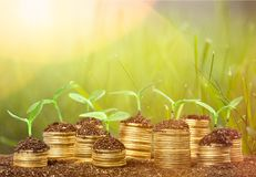 Growth. Green business money investment prosperity concept royalty free stock image
