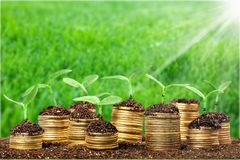 Growth. Green business money investment prosperity concept royalty free stock photos