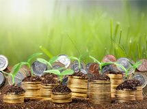Growth. Green business money investment prosperity concept stock photo