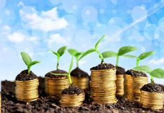 Growth. Green business money investment prosperity concept stock photography