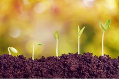 Growth. Seed plant seedling bud sowing sapling Royalty Free Stock Images