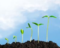 Growth. Seedling plant sowing bean dirt nature Royalty Free Stock Images