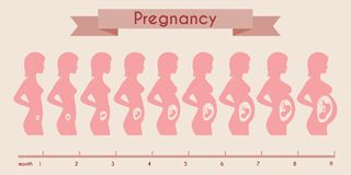 Growth of human fetus with female silhouette in Royalty Free Stock Photography