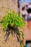 A growth leafs Royalty Free Stock Photography