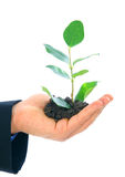 Growth Of New Life. Hand of male holding growth plant. concept for environmental friendly or growth Stock Photo