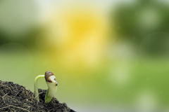 Growth of new life. On nature  background Stock Images