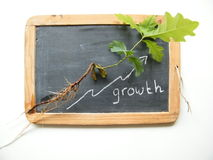 Natural Growth development process schoolboard. Natural growth development process with text Royalty Free Stock Photography