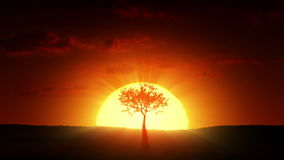 Growth Of A Tree At Sunrise Stock Photo