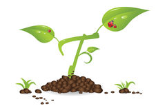 Growth plant Stock Photos