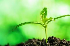 Plant sprouting through the ground Stock Photos