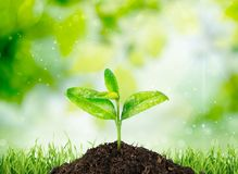 Growth. Plant Dirt Green Beginnings Nature Environmental Conservation Stock Photo