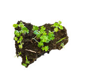Growth plant on mini soli Stock Photos